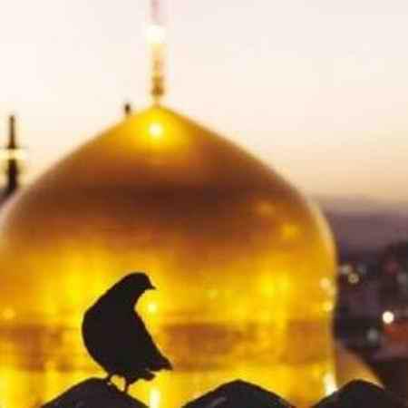 دانلود نوحه قربون کبوترای حرمت امام حسن